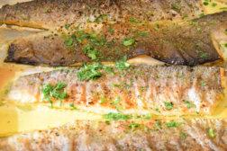 DoN-in-der-Allianz-Fisch